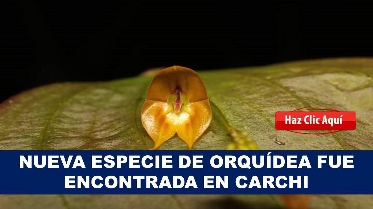 nueva orquidea rara